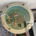 睡蓮鉢のガラス蓋(水槽蓋としてご使用)