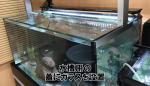 熱帯魚水槽のガラス蓋をご注文いただいたお客様(大阪市生野区N様)