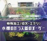 水槽のガラス蓋をオーダーされたお客様(千葉県成田市M様)